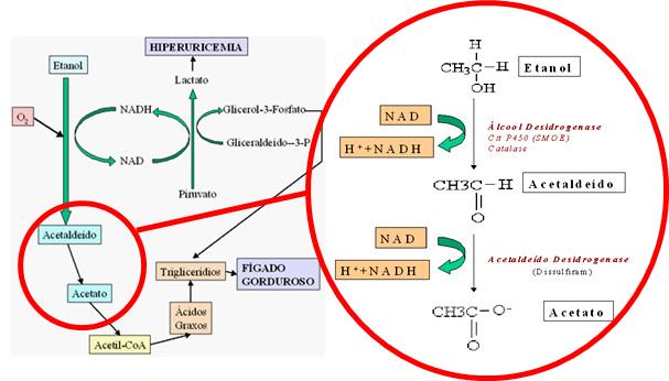 A imagem esquematiza a metabolização do álcool e seus produtos e subprodutos